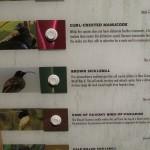 BirdsofParadise08