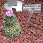 BotanicGardens02