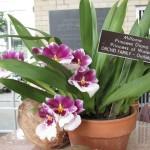 BotanicGardens07