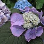 BotanicGardens09